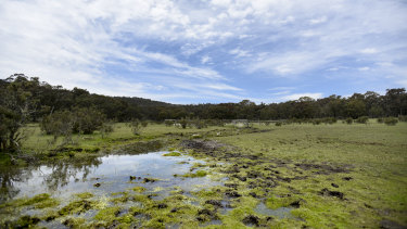 A section of grassland damaged by wild horses near the Tin Mine Track along the NSW and Victorian border.
