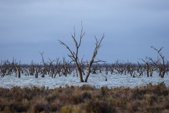 The Nationals want to halt water buy backs for environmental flows under the Murray Darling Basin Plan.