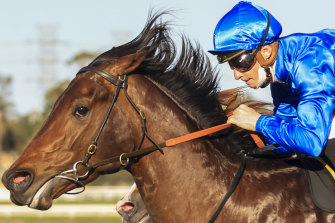 Jockey James McDonald and Anamoe take out the Run To The Rose.