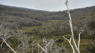 A view of the valley below Mount Gingera in Namadgi National Park.