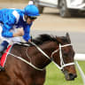 Statue to honour mighty mare Winx at her  Rosehill home