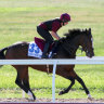 Can Magic Wand conjure Magical form in Cox Plate?