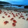 Christmas and Cocos Islands' COVID-driven booms reignite casino debate