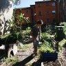 NIMBY fight erupts over 'substandard' inner west community garden