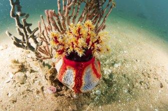 Corals in Exmouth Gulf.