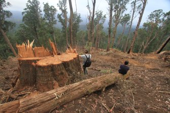 Logging in Victoria's native forests will be completely phased out by 2030.