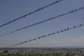 Pigeons rest on wires of a cable car in Srinagar, Indian-controlled Kashmir.