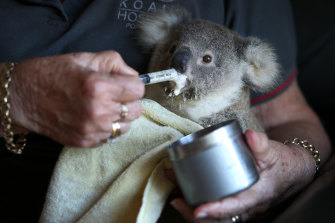 NSW wildlife rescue volunteers provide a service worth $27 million a year.