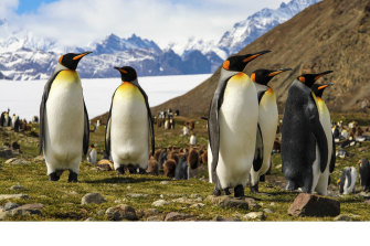 Scientists fear South Georgia's penguin colonies could be threatened by the iceberg's impact.