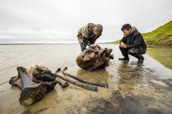 People study a mammoth bone fragment in the Pechevalavato Lake in the Yamalo-Nenets region, Russia.