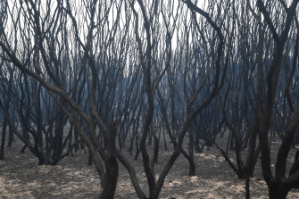 The charred bushland alongside the Princes Highway.