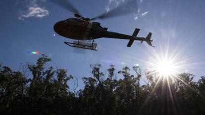 'Just fantastic': Wollemi pine replanting effort wins global gong