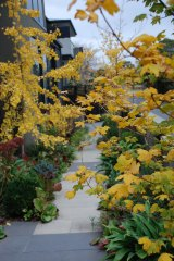 Now is the time to transplant any deciduous shrubs you feel are in the wrong place.