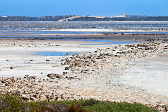 Coorong National Park in South Australia; pipi are harvested from beaches nearby.
