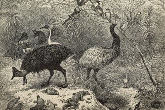 Australian animals and birds engraved on Queensland wood for the 1886 Colonial and Indian Exhibition, London.