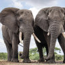 Namibia hit by criticism over elephants' sale