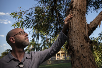 Ecologist Steve Douglas beside the eucalyptus species, dubbed E. Cattai, that he discovered walking near his home in the Hills District of north-western Sydney.
