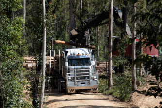 A logging truck is loaded up with timber in a region of the South Brooman State Forest. The area was extensively burnt during the 2019-20 summer bushfires.