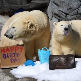 Sea World celebrates as polar cub Mishka turns one