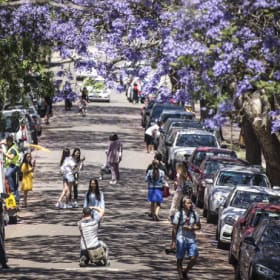 Instagram-inspired tourists swarm Sydney street for selfies with jacarandas