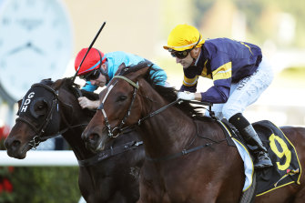 Pierata (left) and Tofane hit the line together at Randwick on Saturday.