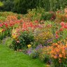 White out: how to make your garden burst with colour