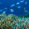 Great Barrier Reef health improves but forecast to fall short of 2025 targets