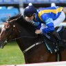Multiple group 1 winner turned stallion It's A Dundeel will again be represented at Monday's Tuncurry meeting.