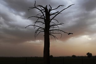 Dust storms sweep topsoil from drought-parched farmlands in the Murray-Darling Basin.