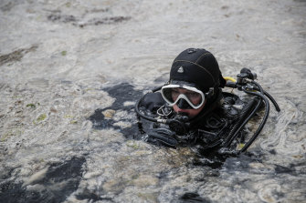 """A diver surveys the sea as experts work to clear a mass of """"sea snot"""" off Istanbul."""