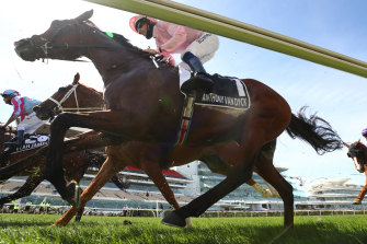 Melbourne Cup fancy Anthony Van Dyck was euthanised after breaking down during the race last week.