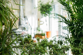 Bringing nature indoors is linked to a vast amount of health benefits.