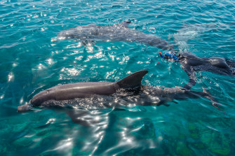 Queensland will remain the only state in Australia that allows breeding of dolphins in captivity for entertainment.