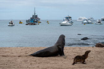 Sea lions on a beach in front of fishing and tourist boats on San Cristobal, Galapagos Islands, Ecuador. The country has been complaining about Chinese vessels overfishing in its vicinity.