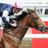 Melbourne Cup winner, stablemate retired to stud