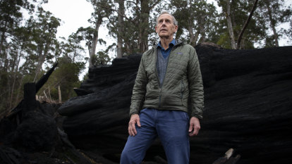 Swift parrot numbers freefall as Bob Brown launches anti-logging case
