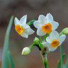 Spring into action for bright bulbs
