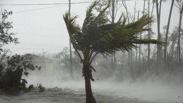 Strong winds from Hurricane Dorian blow the tops of trees while whisking up water from the surface of a canal in Freeport, Grand Bahama, Bahamas.