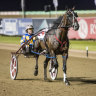 My Field Marshal hopes for late speed in Miracle Mile