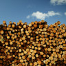 Industry, workers slam 'paltry' $120m support deal for timber industry