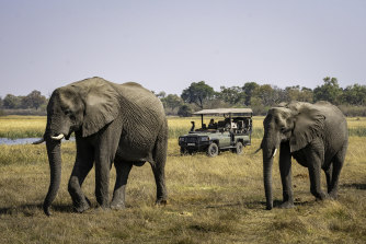 A file picture of elephants at a safari park in Botswana.
