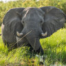 Why Botswana wants Angola's exiled elephants to return home