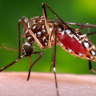Floridians mad at plan to release 750m genetically modified mosquitoes