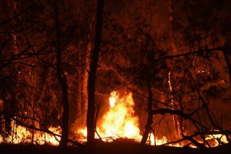 Experts warn Australian forests may take more than 100 years to recover all the carbon spewed out from bushfires this summer - but some wildlife may never recover.