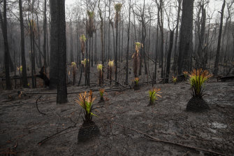Some of the plants resprouting after a bushfire in January near Kangaroo Valley.