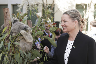 Environment Minister Sussan Ley has warned the status of koalas in various locations may be upgraded to endangered.