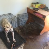 """Danielle Lamprecht was keeping12 dogs in """"appalling"""" conditions, RSPCA Queensland said."""