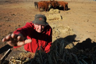John Haycock hand feeding his cattle near Yeoval, in Central Western NSW.