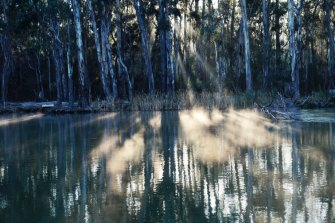 The Murray Valley National Park turns out to be among the fastest growing in popularity in the NSW in terms of visitation numbers.