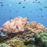 'Death blow': Corals, algae don't acclimatise to more acidic seas